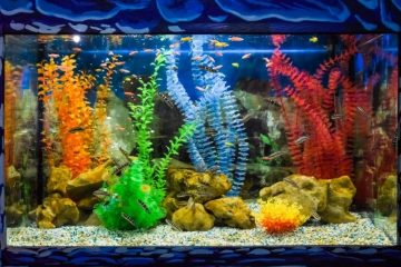 How To Choose the Best Location for Your Home Reef Tank