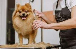 How To Give Your Dog a Taste of Luxury
