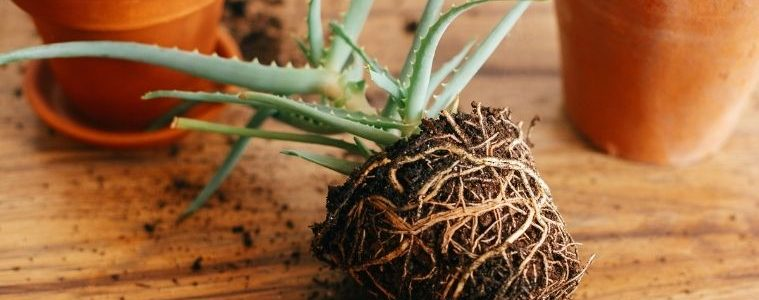 How To Transplant Plants Without Killing Them