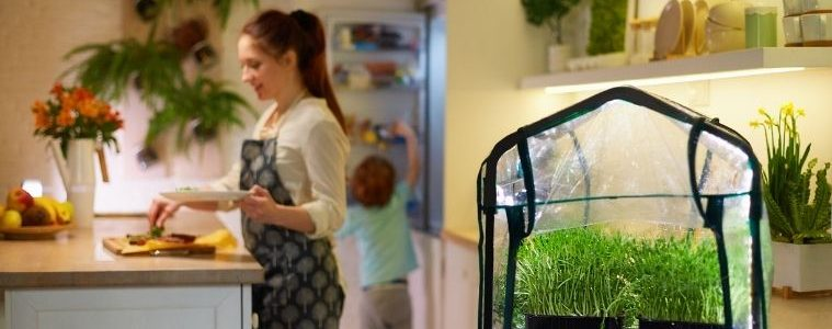 How To Grow a Hydroponic Garden
