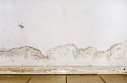Different Ways Mold Can Damage Your Home